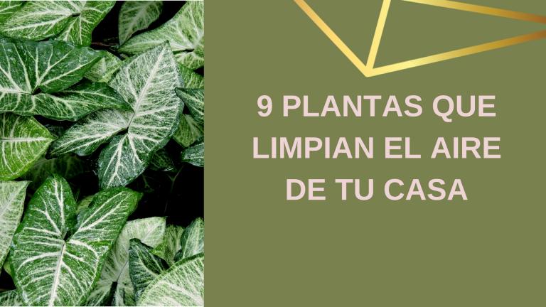 9 Plantas que limpian el aire de de tu casa